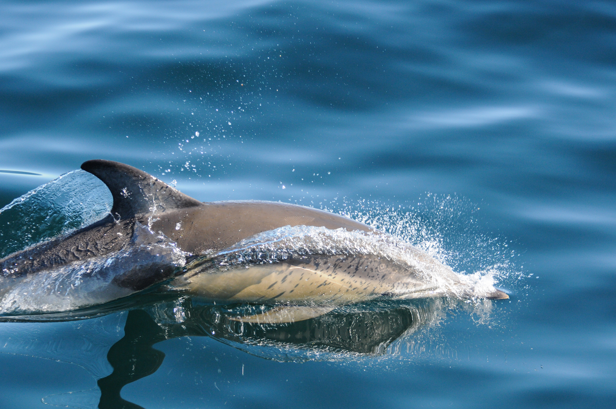 Whale and dolphin watching from boat in patagonia, Argentina, on October 1, 2016